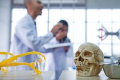 Medical scientists are researching skulls. In lab royalty free stock photography