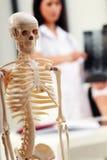 Medical Skeleton. In front of a brunette female doctor Stock Photo