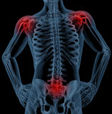 Medical skeleton highlighting joints Royalty Free Stock Image