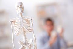 The medical student studing the skeleton. Medical student studing the skeleton Royalty Free Stock Images