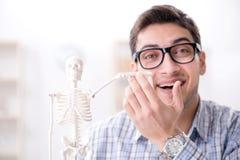 The medical student studing the skeleton. Medical student studing the skeleton Royalty Free Stock Image