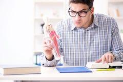 The medical student studing the skeleton. Medical student studing the skeleton Stock Image