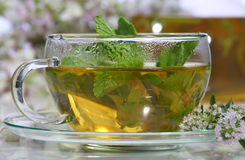 Medical tea with fragrant grasses and mint in a transparent cup Royalty Free Stock Images