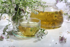 Medical tea with fragrant grasses in a transparent cup Royalty Free Stock Photos