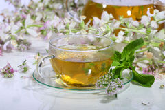 Medical tea with fragrant grasses in a transparent cup Stock Images