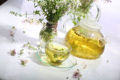 Medical tea with fragrant grasses in a transparent cup Stock Photography