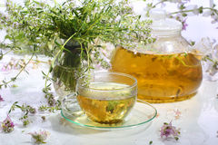 Medical tea with fragrant grasses in a transparent cup Royalty Free Stock Photo