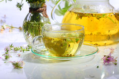 Medical tea with fragrant grasses in a transparent cup Stock Image