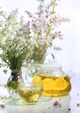 Medical tea with fragrant grasses in a transparent cup Royalty Free Stock Photography