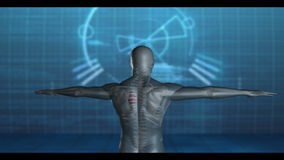 Medical video of revolving human figure Royalty Free Stock Images