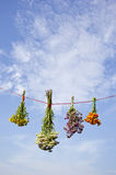 Medical wild flower four bunch on string and sky background Royalty Free Stock Photo