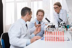 Scientists examining sample Royalty Free Stock Photography