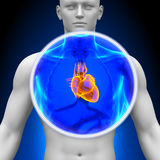 Medical X-Ray Scan - Heart Stock Photo