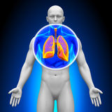 Medical X-Ray Scan - Lungs Stock Photos