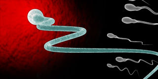 Medically accurate illustration of human sperms and egg Royalty Free Stock Photo