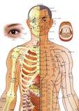 medicin för akupunkturdiagramkines Arkivbild
