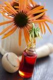 Medicina alternativa del Echinacea Imagen de archivo