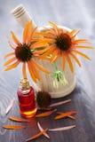 Medicina alternativa del Echinacea Fotografía de archivo libre de regalías