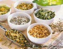 Medicina alternativa Terapia di erbe Piante curative immagini stock libere da diritti