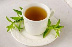 Medicina alternativa Tisana do verbena do limão fotos de stock
