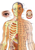 Medicina chinesa - carta da acupunctura Fotografia de Stock