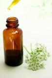 Medicina di erbe con la bottiglia del contagoccia fotografie stock libere da diritti