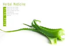 Medicina di erbe della vera dell'aloe Immagine Stock