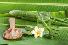 Medicina di erbe molto utile di Vera dell'aloe per il trattamento e noi della pelle Immagini Stock
