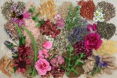 Medicina di erbe per i disordini curativi della pelle Fotografia Stock Libera da Diritti