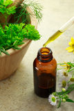Medicina erval com frasco do conta-gotas Fotografia de Stock