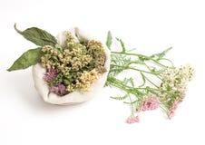 Medicina herbaria Imagenes de archivo