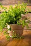 Medicina herbaria alternativa. Foto de archivo libre de regalías