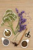 Medicina herbaria de Valerian Chamomile y de la lavanda fotos de archivo