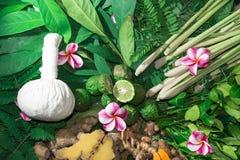 Medicina herbaria del ayurveda indio alternativo de la medicina Foto de archivo
