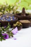 Medicina herbaria, fondo de madera de la tabla Fotografía de archivo