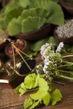 Medicina herbaria, fondo de madera de la tabla Fotos de archivo