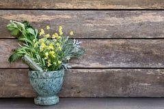 Medicina herbaria - manojos frescos de hierbas en mortero de mármol verde foto de archivo libre de regalías