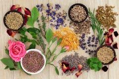 Medicina herbaria natural fotografía de archivo