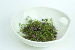 Medicina herbaria, tomillo del bosque en el tazón de fuente blanco Foto de archivo
