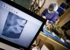 Medicina veterinaria di alta tecnologia Immagini Stock Libere da Diritti