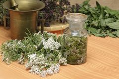 medicinal örtar royaltyfria foton