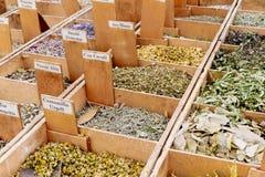 medicinal örtar Royaltyfria Bilder