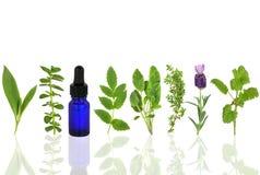 Medicinal And Culinary Herbs Royalty Free Stock Images