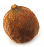 Medicinal Bahera fruits of India Stock Image