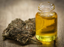 Medicinal cannabis with extract oil Royalty Free Stock Images