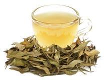 Medicinal Chirata with herbal tea Royalty Free Stock Photo