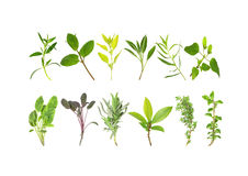 Medicinal and Culinary Herb Leaves Royalty Free Stock Images