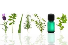 Medicinal and Culinary Herbs Stock Photo