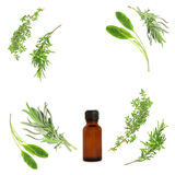 Medicinal and Culinary Herbs Royalty Free Stock Photos