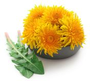 Medicinal dandelion. In a bowl over white background royalty free stock photos